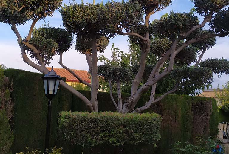 empresas-jardineria-valencia_e505e106305ad3269608c7bed2ee23b7