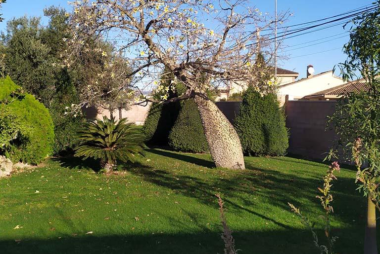 jardinero barato valencia