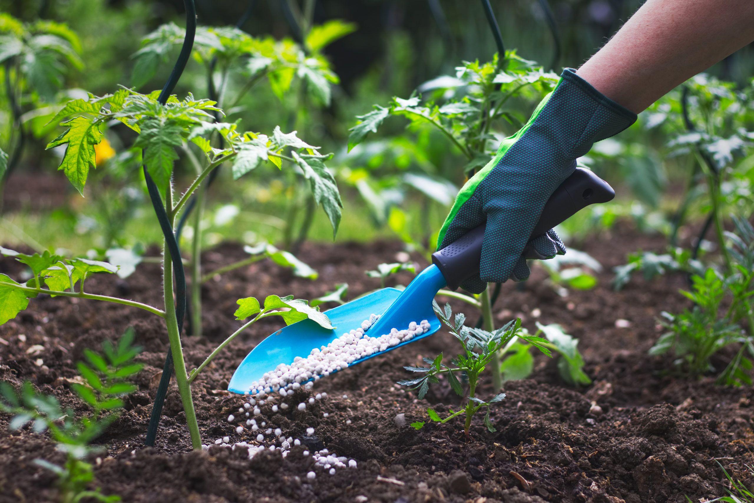 ¿Qué es un fertilizante?